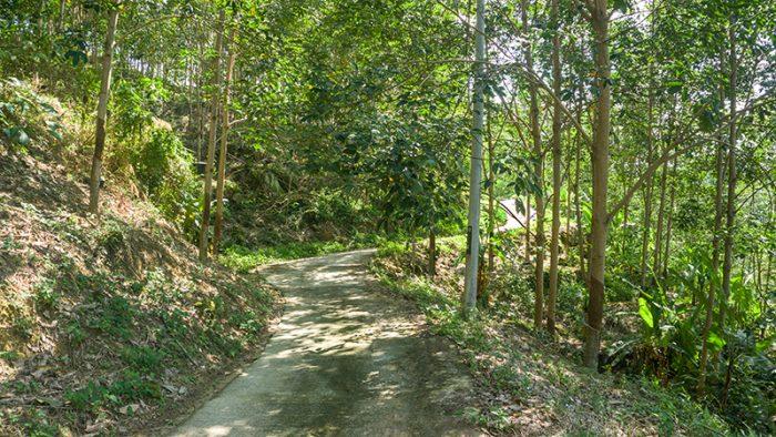 Paradise Hill
